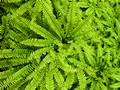 I love the smell of ferns it reminds me of the holidays we use to take in Brecon Beacons in Wales