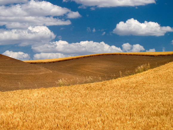 Palouse Countryside
