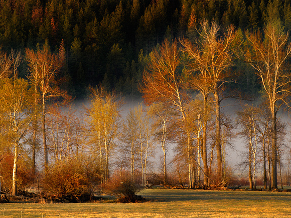 Morning sun with mist rising over the Nicola River