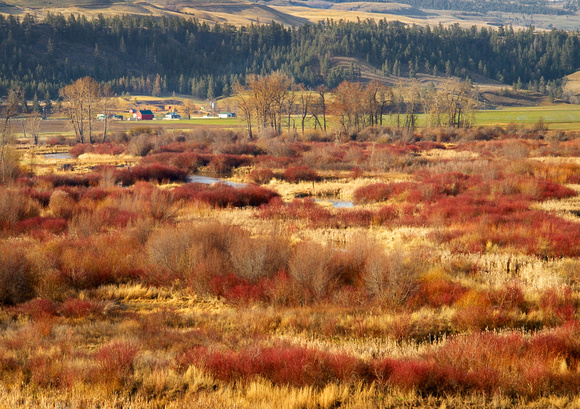 Swamp area outside Quilchena in autumn colour