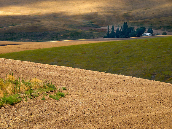 Palouse Homestead